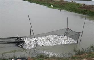 虱目魚受寒害 南市加碼補助清藻、農業保險費