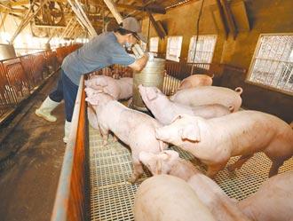 養豬百億基金 最快春節前實施