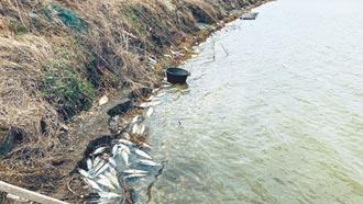 嘉縣養殖魚寒害 吳郭魚涷死3.3萬公斤