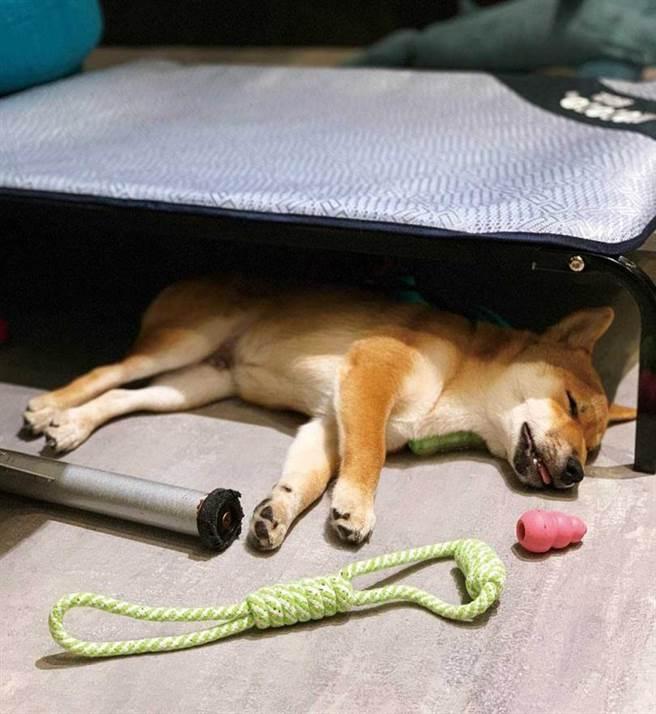 不清楚架高床架用途的威力,竟然睡在床底下,讓李佳玲看了哭笑不得。(圖/李佳玲提供)