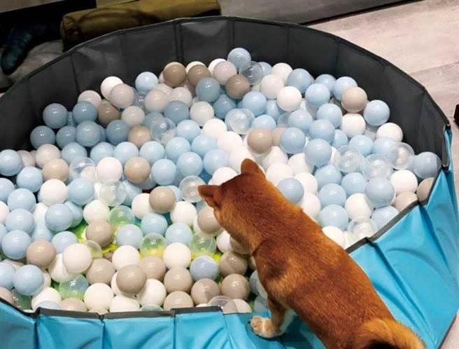 為了威力,李佳玲變成「購物狂媽媽」,甚至網購一座球池給威力玩耍。(圖/李佳玲提供)
