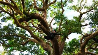 爬上100岁茄苳树 玩恒春秘境再品花雕鸡狮子头