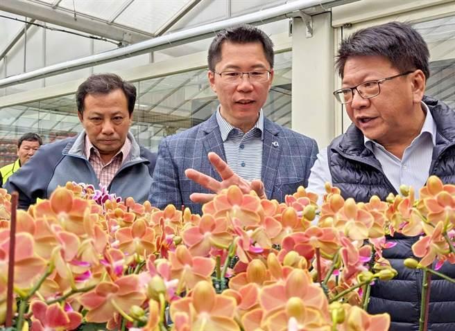 屏東氣候溫暖適合種植蘭花,是研發、育苗的重要基地,領航世界蘭花最新品種。縣長潘孟安(右)到潮州永宏蘭業看蘭花栽種狀況。(潘建志攝)