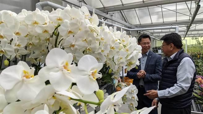 屏東氣候溫暖適合種植蘭花,是研發、育苗的重要基地,領航世界蘭花最新品種。(潘建志攝)