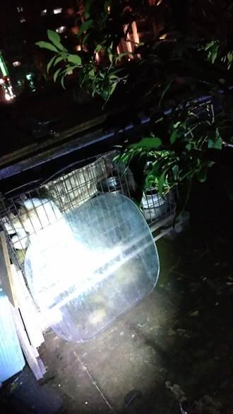 永和顶楼犬只低温受冻哀号 动保处紧急救援安置