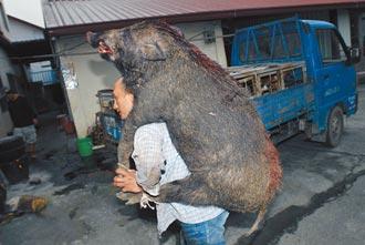 無萊劑山豬肉滯銷 脫線幫忙賣