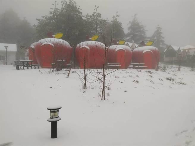 福壽山農場露營區再度降雪,蘋果屋宛如灑了糖霜。(福壽山農場提供/王文吉台中傳真)