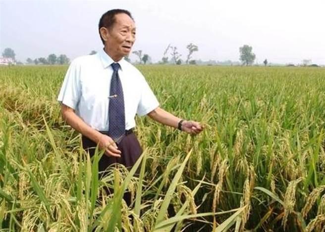 「雜交水稻之父」袁隆平。(圖/東網)