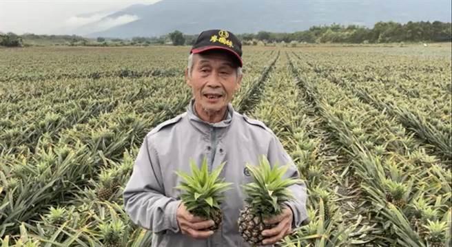 農友王聰益說他的鳳梨田約有一甲三面積,但有一半鳳梨花出現枯黃狀況,賣相變差,春節恐無法出貨。(農友提供/王志偉花蓮傳真)