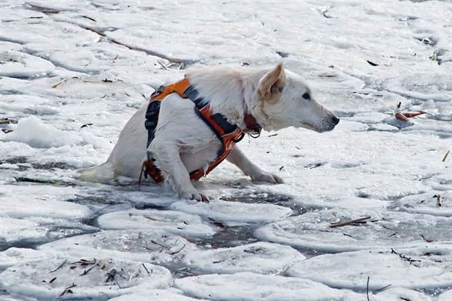 英國男子見一隻黑狗落入冰冷的湖中,立刻破冰跳下水進行救援。(示意圖/達志影像)