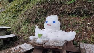 最長壽 台東向陽雪人已活6天破紀錄