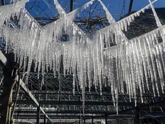 武陵農場凍成冰宮 水晶冰簾奇景美到屏息