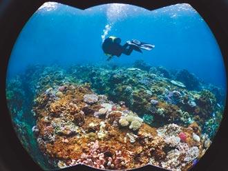 全台珊瑚白化 小琉球逾半熱死