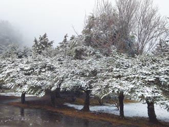 大雪山飘仙气 福寿山苹果屋撒糖霜