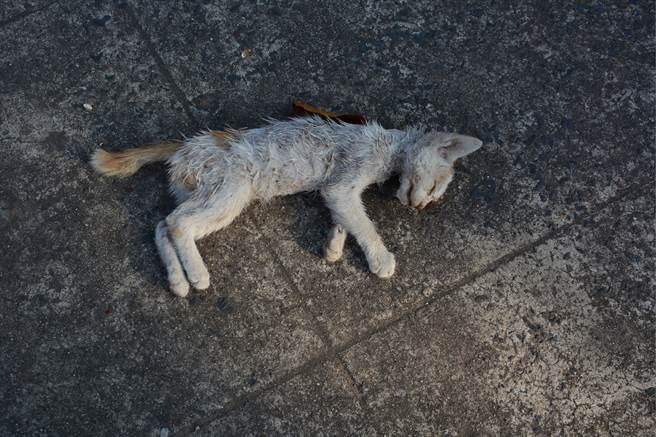 飼主發現愛貓不見,隨後在自家附近發現一具貓屍,當時誤以為是自己的貓被撞死,沒想到竟是烏龍一場。(示意圖/達志影像)