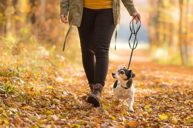 加拿大一對夫妻為了在宵禁期間出門,竟讓丈夫當狗,妻子牽著狗繩上街趴趴走。(示意圖/達志影像)