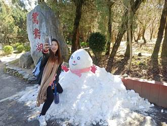 福壽山殘雪成巨大雪人 披粉圍巾萌翻 遊客好嗨爭合影