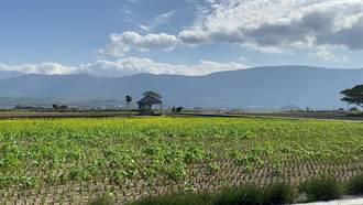 台東縱谷溉水減4成 實施輪灌鼓勵休耕