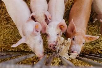 5隻豬成精了 超神合作用鼻頂柵欄越獄 結局好尷尬