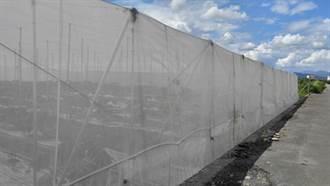 美濃木瓜農園區曾文秋雙層網布覆蓋 再低溫也不怕