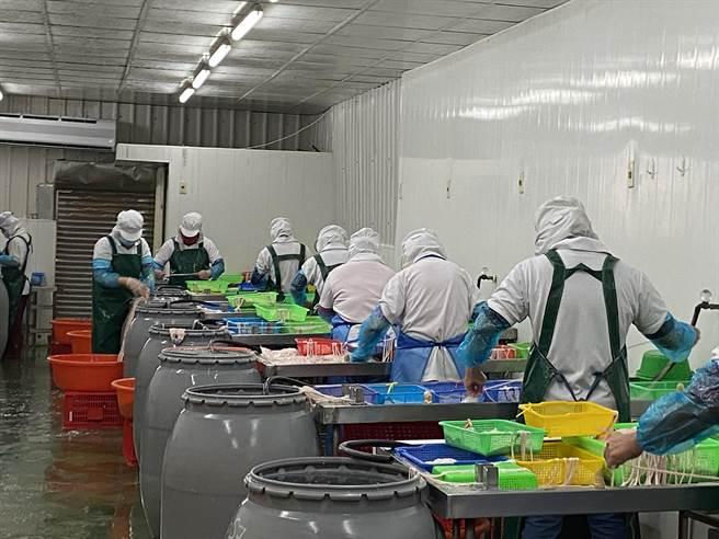 永一腸衣自法國、加拿大進口豬腸製作腸衣,下游生產出香腸、大腸。(曹婷婷攝)