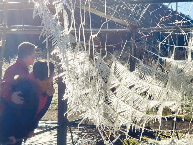 武陵農場小冰宮出現水晶網景致,遊客好奇探頭觀察難得一見的奇景。(武陵農場提供/陳淑娥台中傳真)