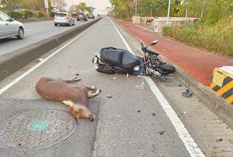 3車衝撞鹿殺 騎士全身傷