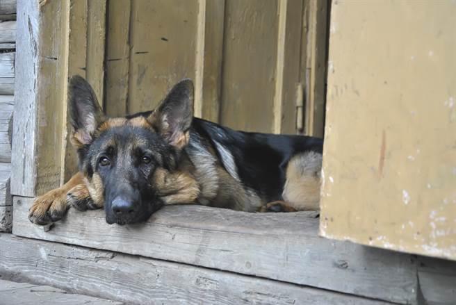 退役警犬重逢老搭檔泛淚狂討摸 坐上車不讓離開惹鼻酸