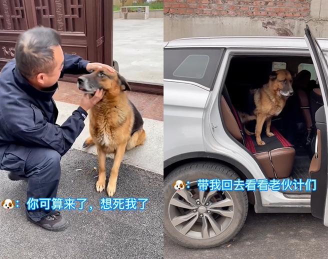 訓犬員要坐車離開時,旺旺還不捨地跳上車,不願讓他們離開。(圖/擷取自淅川特警抖音)