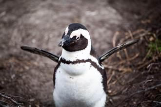 池袋天空驚現飛天企鵝 神奇畫面療癒千人:看不膩