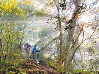 最魔幻的森林 山友安全挑戰塔曼山