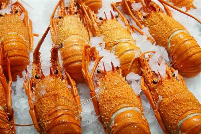 大陸抵制澳洲龍蝦,因此,澳洲業者只好出口轉內銷,但價格腰斬,一開始民眾還瘋狂搶購,但現在似乎已經吃膩了。(示意圖/達志影像/shutterstock)