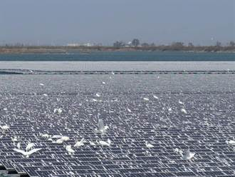 新塭滯洪池太陽能板遍布大片鳥屎 光電業者:樂見