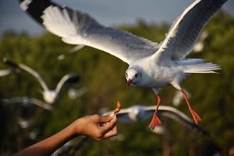 衰男嘴咬麵包餵海鷗 下秒天降濃稠白液洗臉 悲劇瞬間曝光