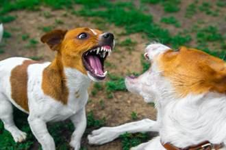 2汪凶狠齜牙縫隙中吵架 大門一開秒裝沒事變超孬