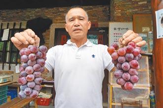 彭文钦返乡种葡萄 打响赏梅秘境