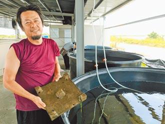 養殖業拚升級 漁電共生找出路