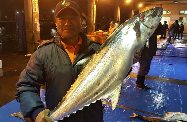 澎湖馬公第三漁港在眾多的漁獲拍賣中,出現2尾少見的「白腹魚」,都重達10公斤以上,其中1尾12.8公斤,最後以每公斤新台幣8888元標出,創下漁市新高紀錄。(圖/中央社)