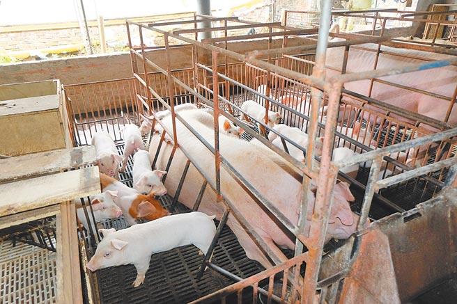 國產豬價漲至每公斤77元,可能突破80元大關。(張朝欣攝)