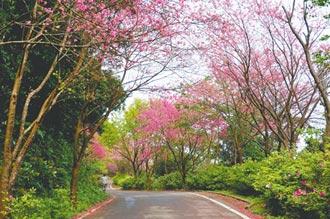新北景觀 直追東京六本木大道