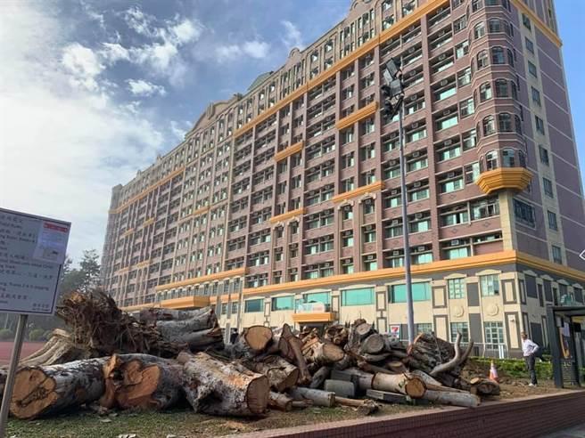 南臺科大校園樹木遭砍除。(讀者提供/曹婷婷台南傳真)