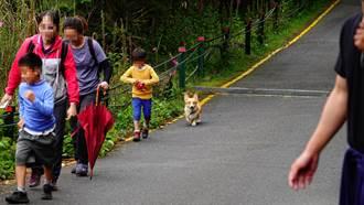 玉管處修正園內禁止事項 玉山國家公園禁帶寵物