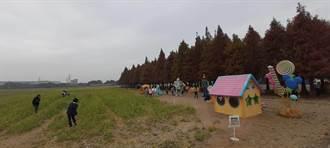 六甲落羽松季30日登場 黃偉哲邀遊客來健康旅遊