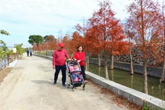 公館也有落羽松祕境 中義社區營造姊妹泉周邊景點