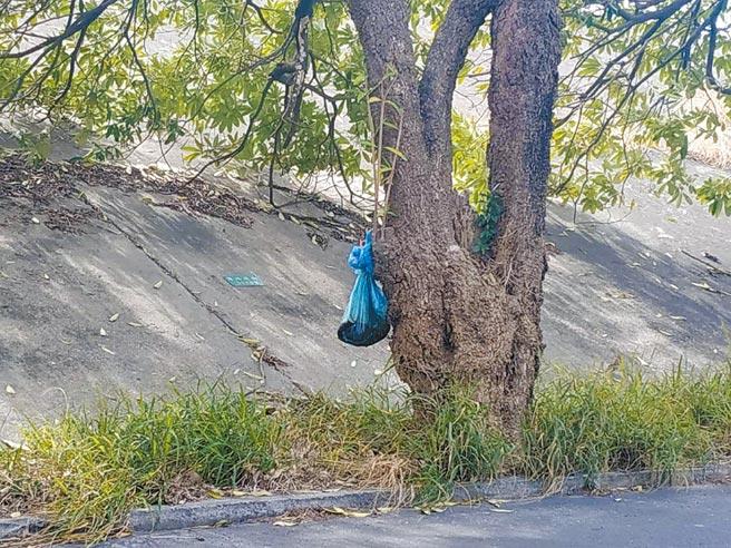 寒流来袭「死猫吊树头」增多,云林县北港镇公所将加强宣导取缔。(张朝欣摄)