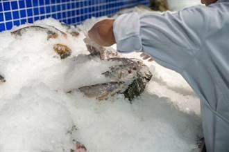 冷凍魚比較不新鮮?專家教你挑好魚 避開NG解凍