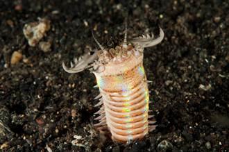 2000萬年前海底巨蟲稱霸台灣東北部 319個巢穴化石出土