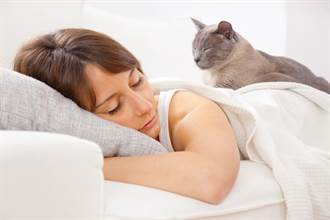 主人每天睡醒都好累 看監視器驚覺被愛貓狂揍4小時