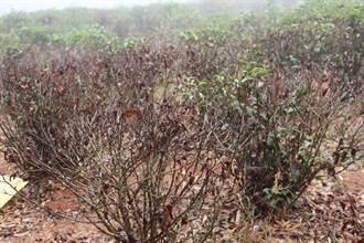 缺水又低溫農作出狀況 苗栗協助爭取補助