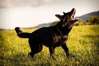 路邊黑狗突追車狂吠 騎士上前查看嚇壞急報警